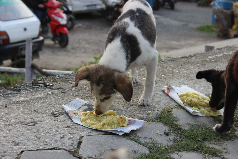 Feeding hungry street dogs in Nepal